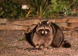 Evening visitor at ISO3200.jpg