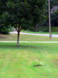 my 2 shade trees again.jpg