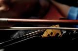 Violin Powder