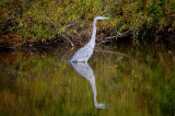 Water Birds of Core Creek Park II