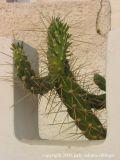 leaning cactus