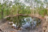 Woodland pool _DSC3705
