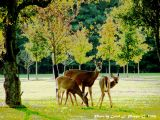 Mother and Twin Fawns.