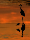 Sandill Crane