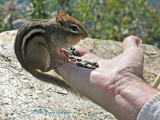 Peter and the Chipmunk