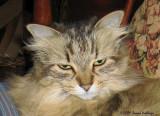 Poco The Kitty