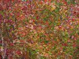 Vermont leaf color