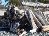 Driftwood at Whiffen Spit near Sooke (T'sou-Ke)