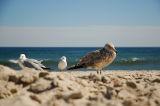three gulls at the beach