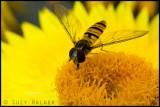 Mini wasp