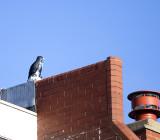 Spooky Hawk