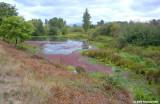 A Delta Ponds Morning