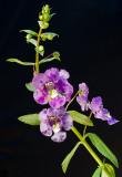 08-07 Flowers 02.JPG