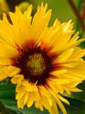 08-06 Flowers 04.JPG