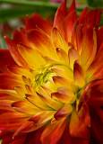 08-06 Flowers 05.JPG