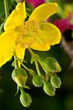 08-06 Flowers 06.JPG