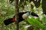 Tena Area, Ecuador