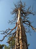 Trees DeadGiant.jpg