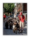 Les petits bergers et leurs chèvres