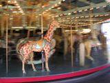 still life giraffe