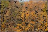 Black Birds in Numbers