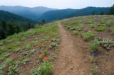 Iron mt./Cone peak/Echo Basin.... field trip