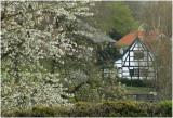 Noorbeek - voorjaar