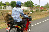 Back seat riding-Khon Kaen