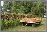 ...pumpkin patch