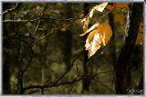 leafs...