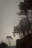 Misty Sicily