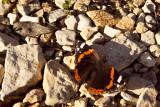Sicilian Butterfly... La farfalla