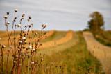 gravel farm road