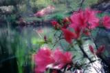 Mynelle Gardens