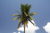 Coconut Tree and sky with circular polarizing filter