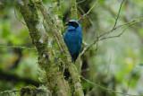 Turquoise Jay3