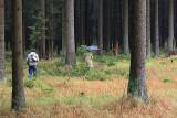 Harz National Park 2.jpg