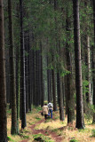 Harz National Park 3.jpg
