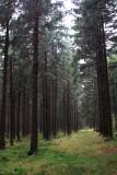 Harz National Park 10.jpg