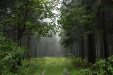 Harz National Park 13.jpg