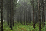 Harz National Park 14.jpg