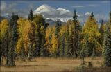 Denali across the Forests