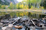 Beaver Pond along  Cottonwood Pass
