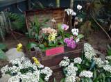 Rhode Island Orchid Society