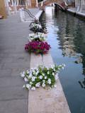 Petunia -1160398.jpg