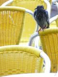 Venise-1210391-pigeon sous la pluie.jpg