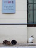 gatti di Venezia 1150498.jpg