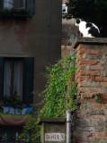 gatto di Venezia 1150496.jpg