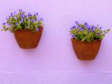 Fleurs a Burano - 1150792.jpg