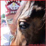 Paso Fino Horses and the 4th of July Parade Cle Elum
